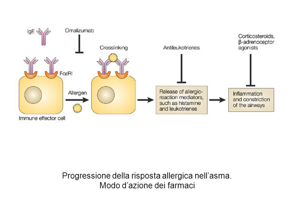 Progressione della risposta allergica nell'asma.