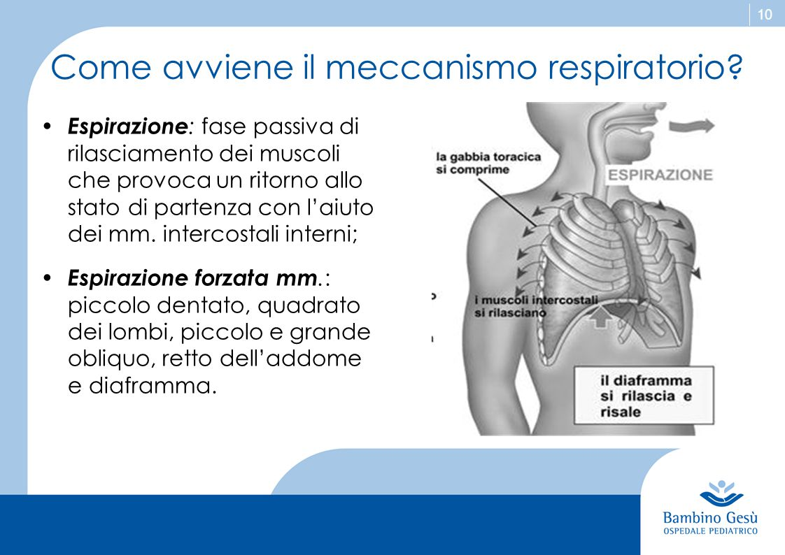 Come avviene il meccanismo respiratorio