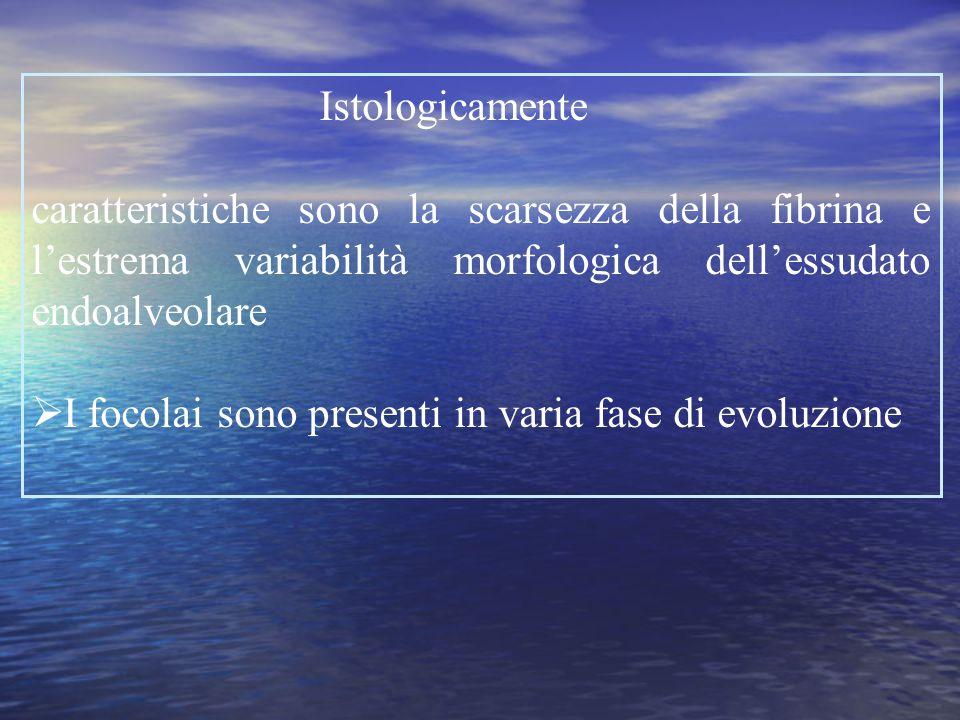 Istologicamente caratteristiche sono la scarsezza della fibrina e l'estrema variabilità morfologica dell'essudato endoalveolare.