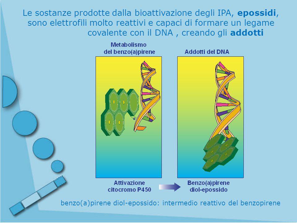 benzo(a)pirene diol-epossido: intermedio reattivo del benzopirene