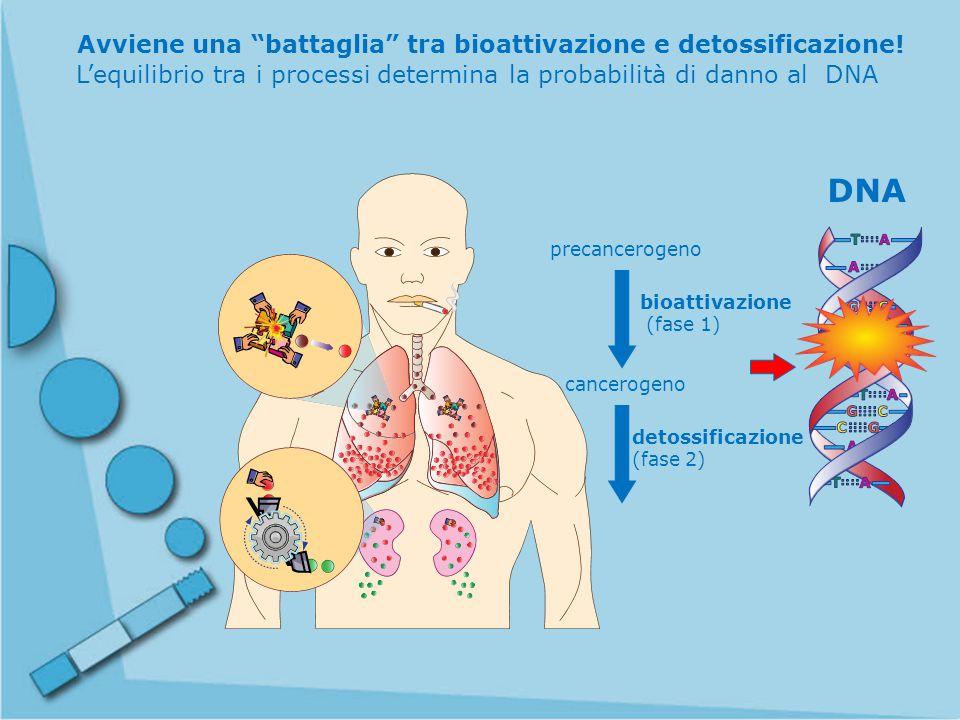 Avviene una battaglia tra bioattivazione e detossificazione!
