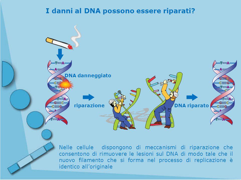 I danni al DNA possono essere riparati
