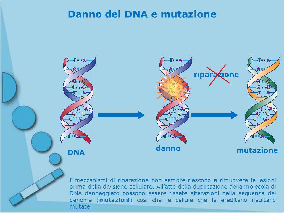 Danno del DNA e mutazione