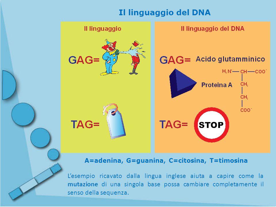 A=adenina, G=guanina, C=citosina, T=timosina