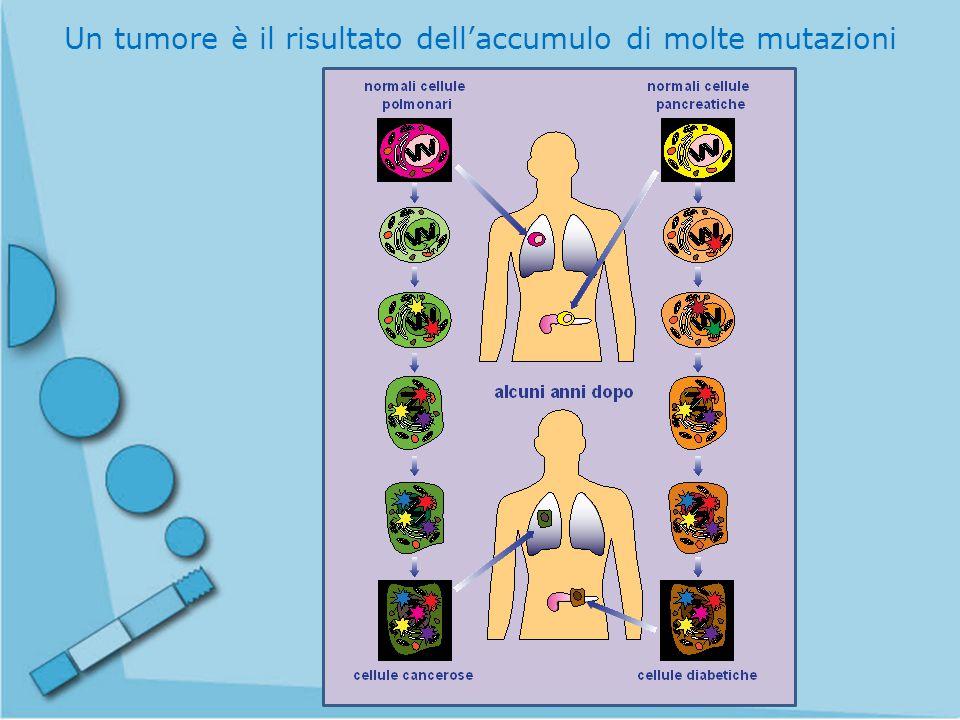 Un tumore è il risultato dell'accumulo di molte mutazioni