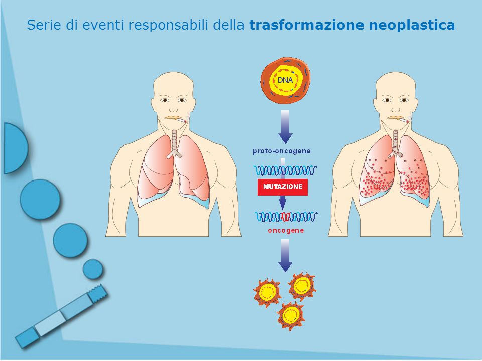 Serie di eventi responsabili della trasformazione neoplastica