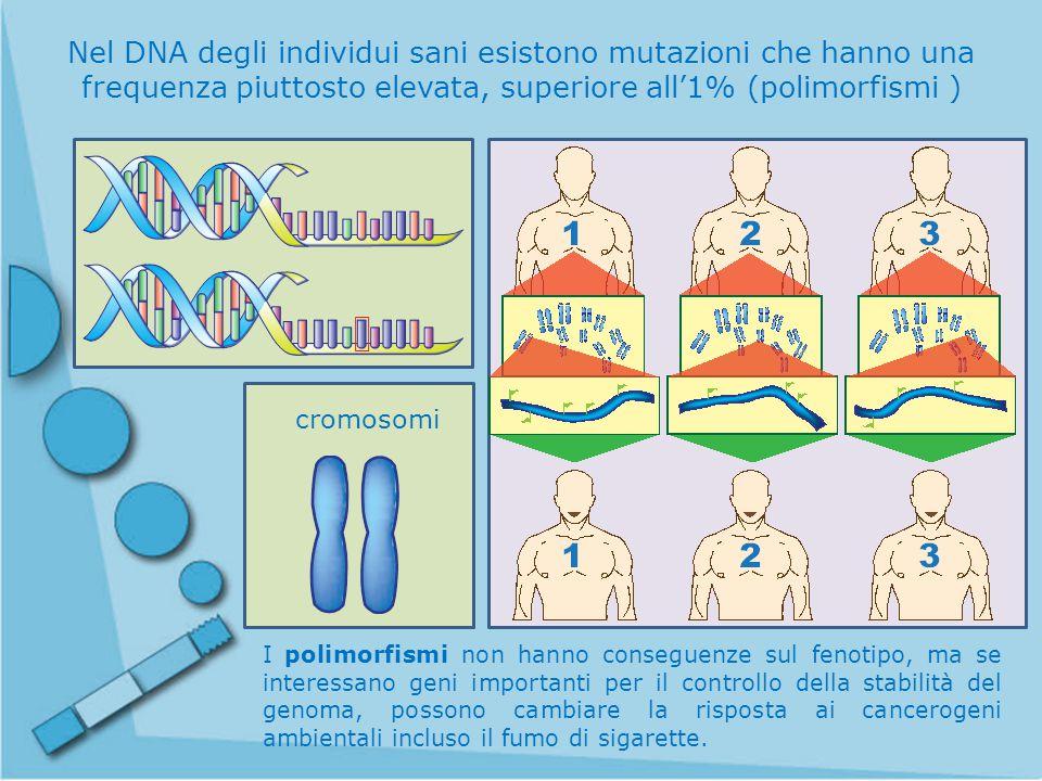 Nel DNA degli individui sani esistono mutazioni che hanno una frequenza piuttosto elevata, superiore all'1% (polimorfismi )