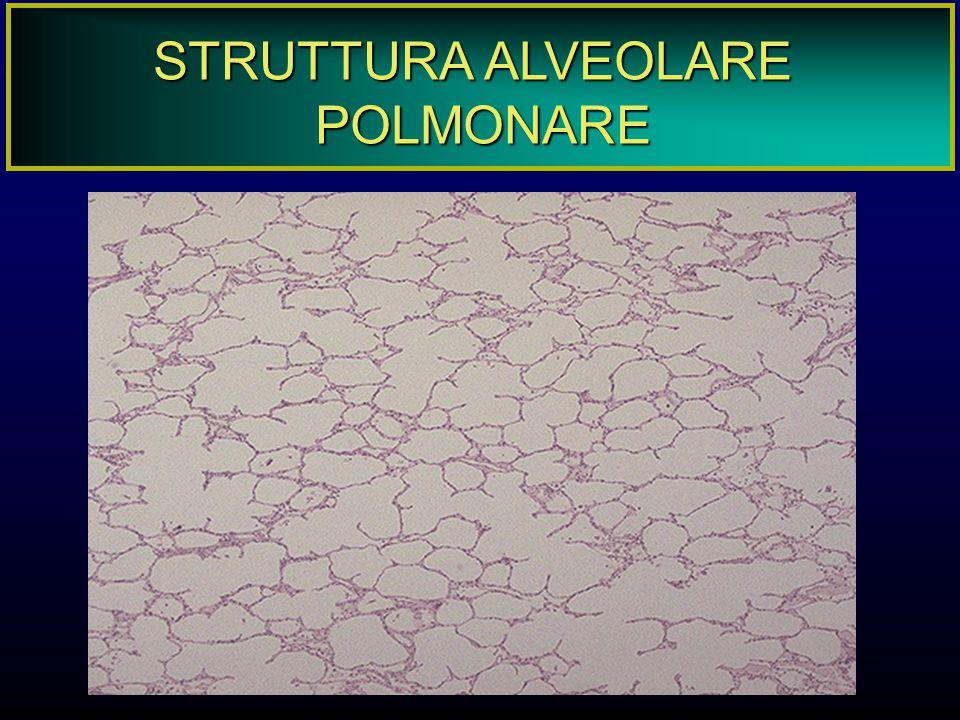 STRUTTURA ALVEOLARE POLMONARE