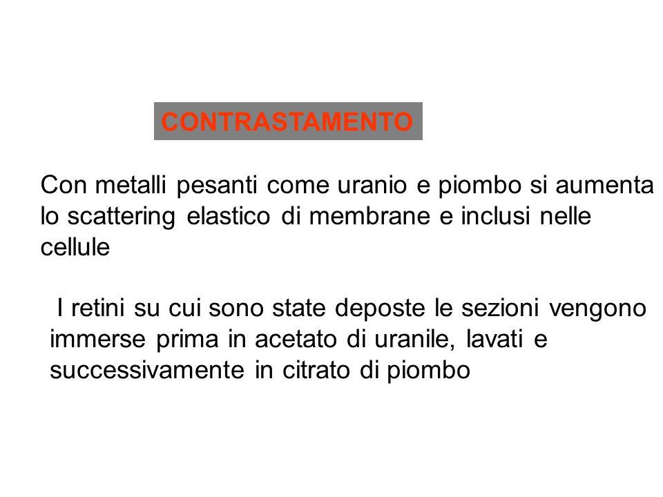 CONTRASTAMENTO Con metalli pesanti come uranio e piombo si aumenta. lo scattering elastico di membrane e inclusi nelle.