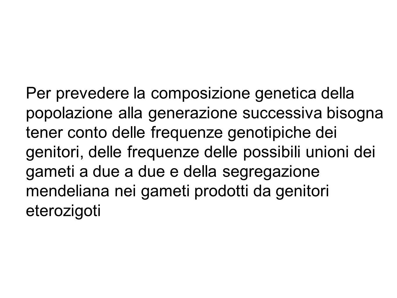 Per prevedere la composizione genetica della popolazione alla generazione successiva bisogna tener conto delle frequenze genotipiche dei genitori, delle frequenze delle possibili unioni dei gameti a due a due e della segregazione mendeliana nei gameti prodotti da genitori eterozigoti