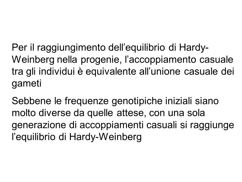 Per il raggiungimento dell'equilibrio di Hardy- Weinberg nella progenie, l'accoppiamento casuale tra gli individui è equivalente all'unione casuale dei gameti Sebbene le frequenze genotipiche iniziali siano molto diverse da quelle attese, con una sola generazione di accoppiamenti casuali si raggiunge l'equilibrio di Hardy-Weinberg