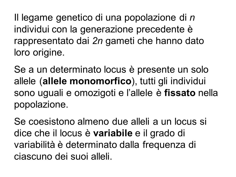 Il legame genetico di una popolazione di n individui con la generazione precedente è rappresentato dai 2n gameti che hanno dato loro origine.