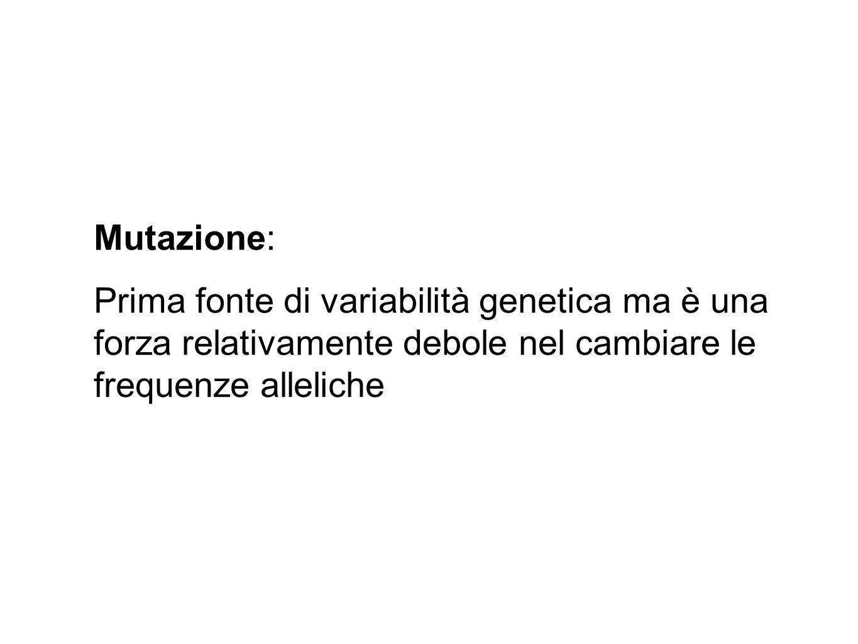 Mutazione: Prima fonte di variabilità genetica ma è una forza relativamente debole nel cambiare le frequenze alleliche