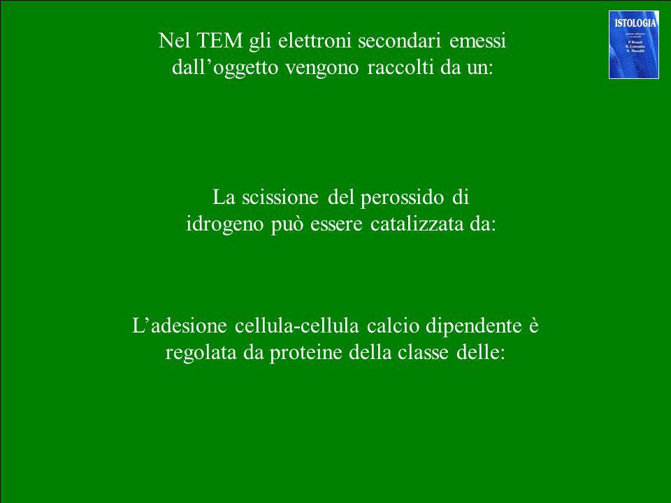 La scissione del perossido di idrogeno può essere catalizzata da: