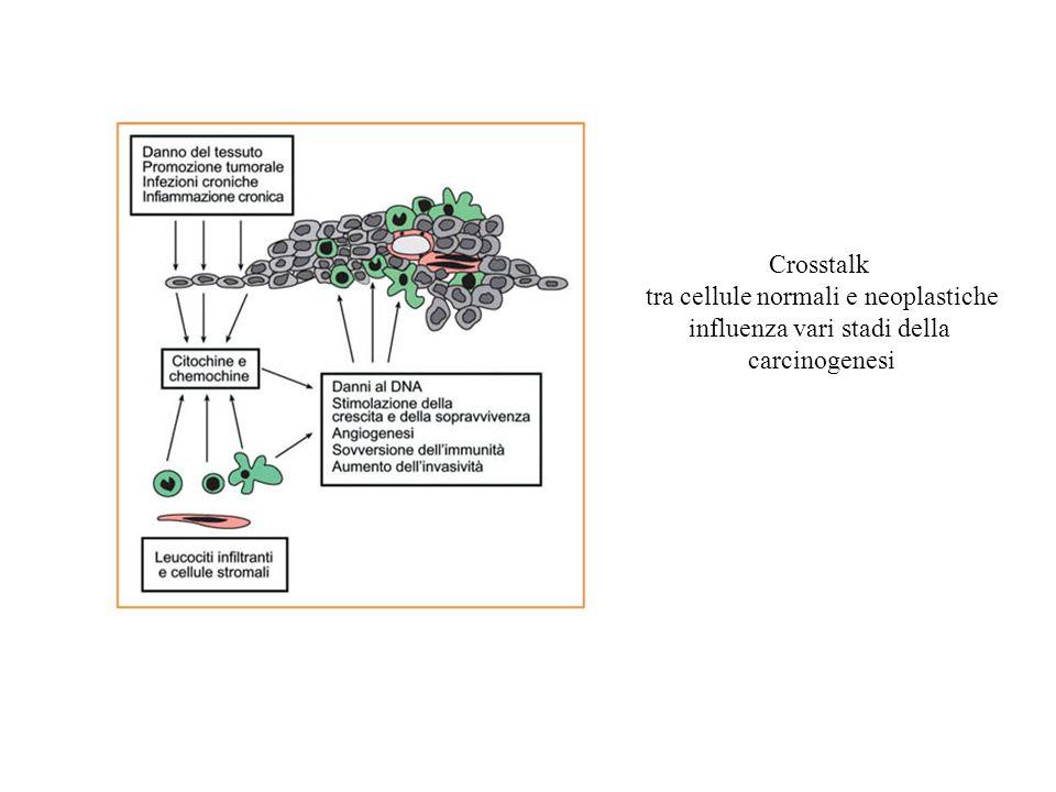 tra cellule normali e neoplastiche influenza vari stadi della