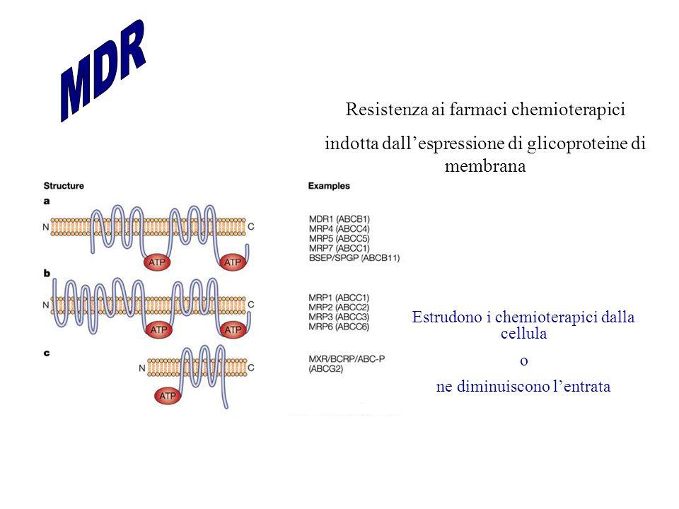 MDR Resistenza ai farmaci chemioterapici