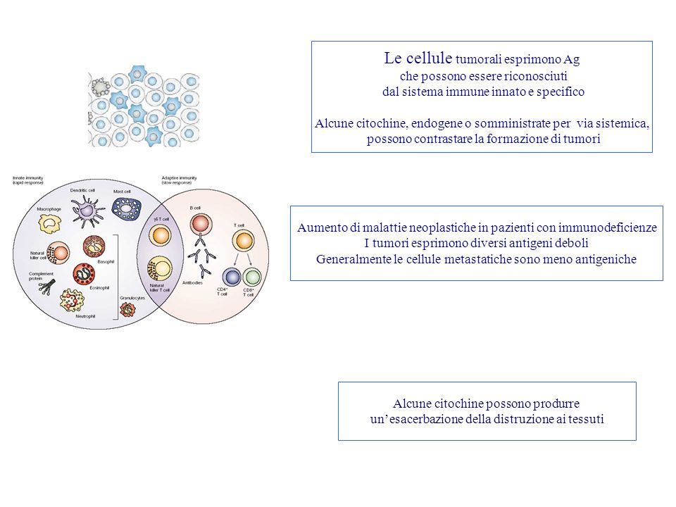 Le cellule tumorali esprimono Ag