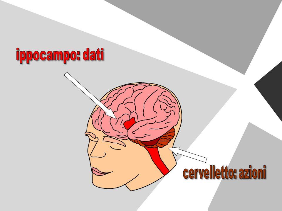 ippocampo: dati cervelletto: azioni