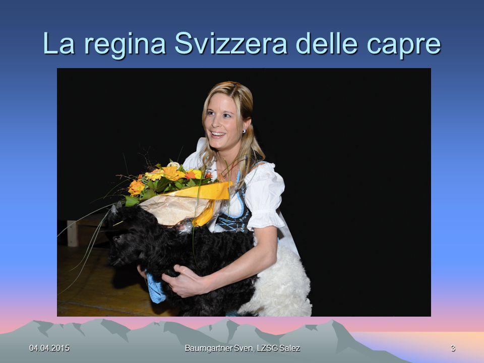 La regina Svizzera delle capre