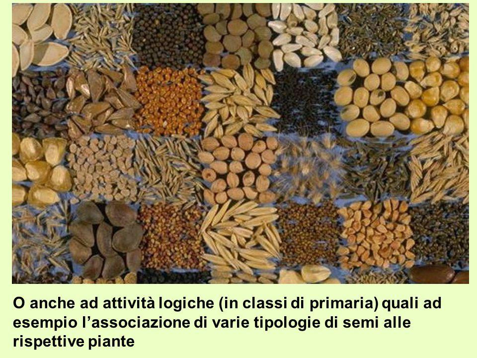 O anche ad attività logiche (in classi di primaria) quali ad esempio l'associazione di varie tipologie di semi alle rispettive piante