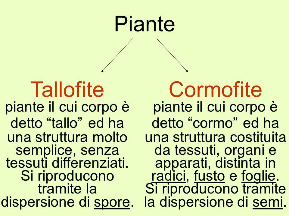 Piante Tallofite Cormofite