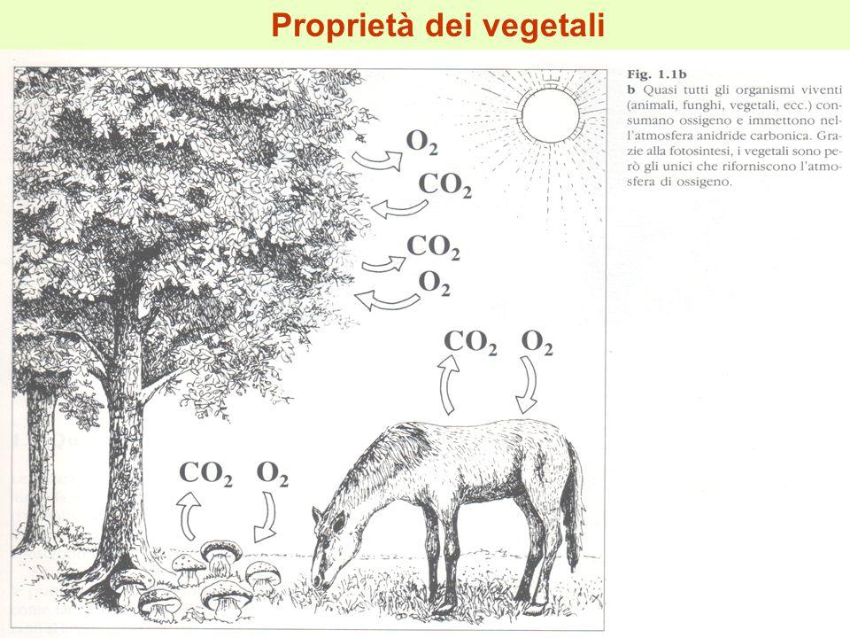Proprietà dei vegetali