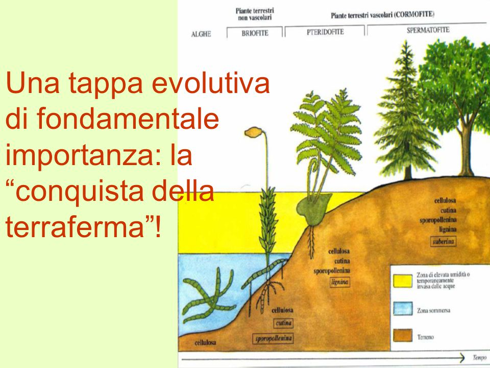 Una tappa evolutiva di fondamentale importanza: la conquista della terraferma !