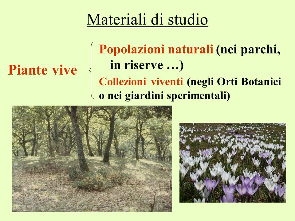 Materiali di studio Piante vive