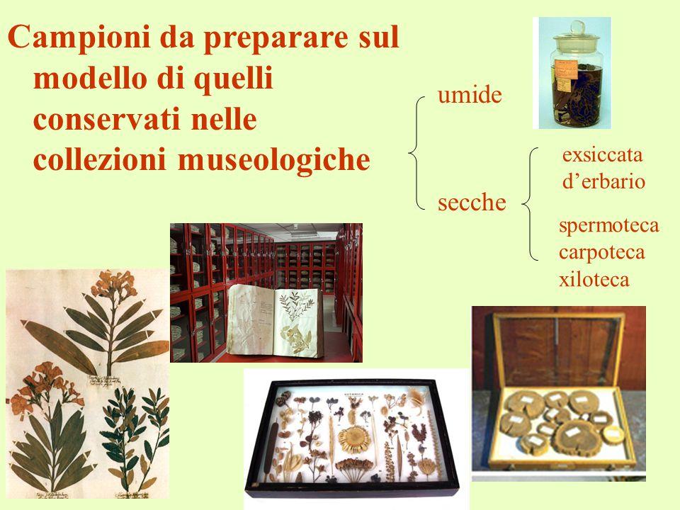 Campioni da preparare sul modello di quelli conservati nelle collezioni museologiche