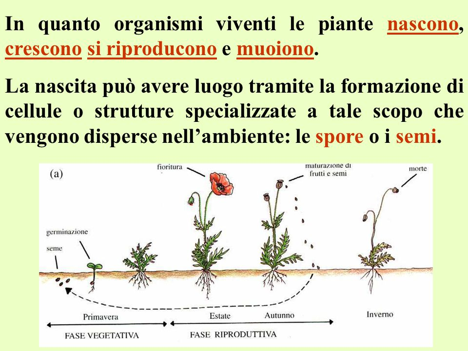 In quanto organismi viventi le piante nascono, crescono si riproducono e muoiono.