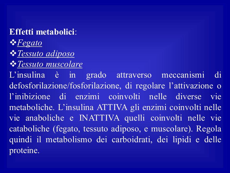 Effetti metabolici: Fegato. Tessuto adiposo. Tessuto muscolare.