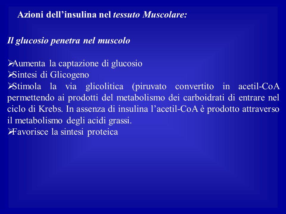 Azioni dell'insulina nel tessuto Muscolare: