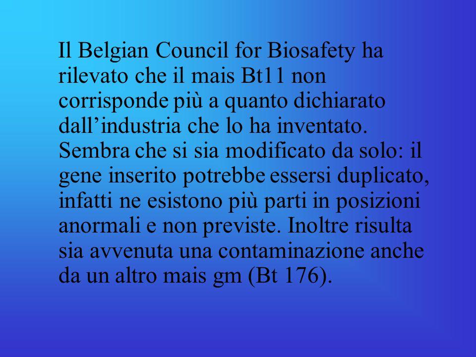 Il Belgian Council for Biosafety ha rilevato che il mais Bt11 non corrisponde più a quanto dichiarato dall'industria che lo ha inventato.