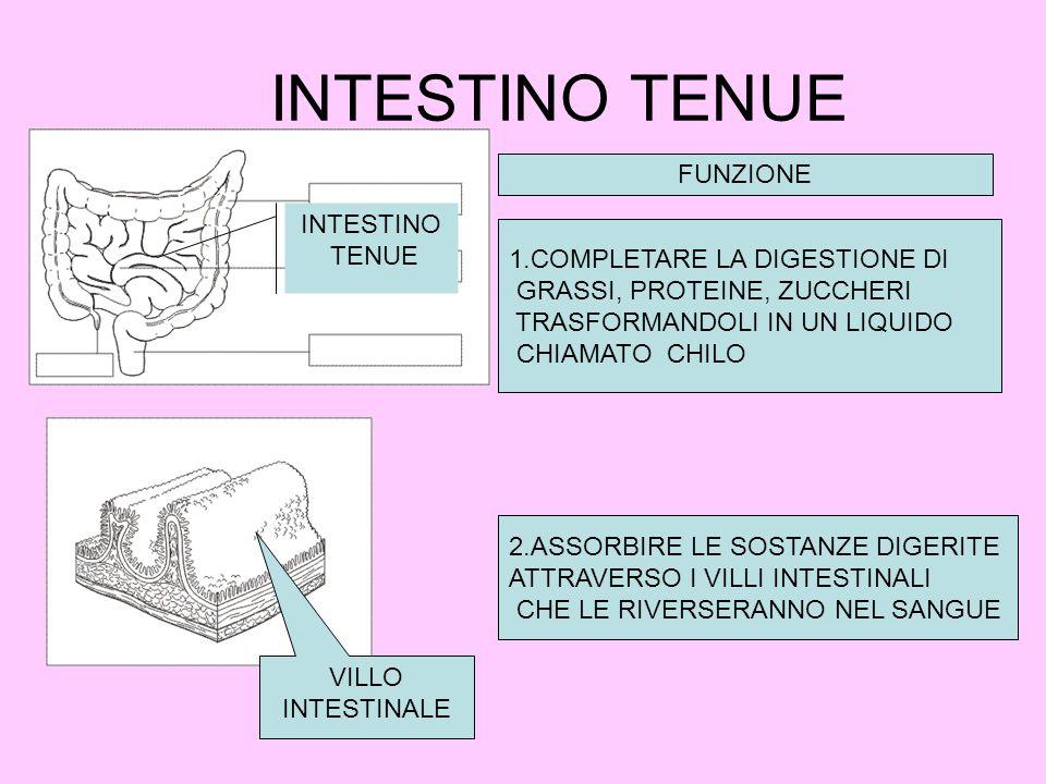 INTESTINO TENUE FUNZIONE INTESTINO TENUE 1.COMPLETARE LA DIGESTIONE DI