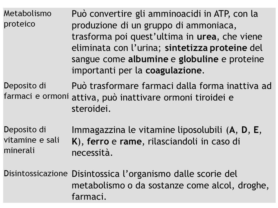 13/09/12 27/11/11. Metabolismo proteico.
