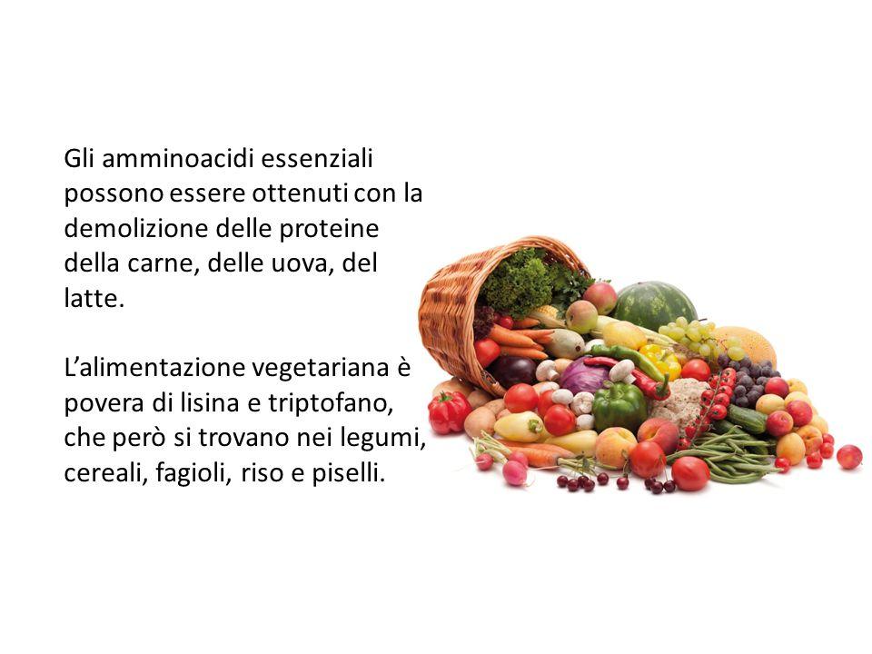 13/09/12 27/11/11. Gli amminoacidi essenziali possono essere ottenuti con la demolizione delle proteine della carne, delle uova, del latte.