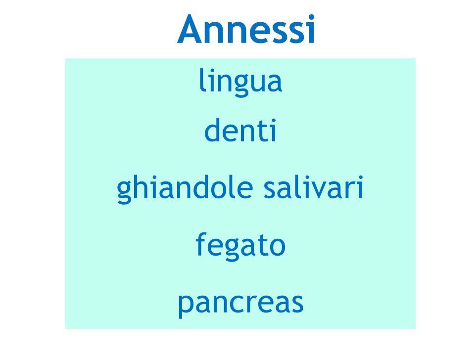 Annessi lingua denti ghiandole salivari fegato pancreas 4 4 4 18/09/12