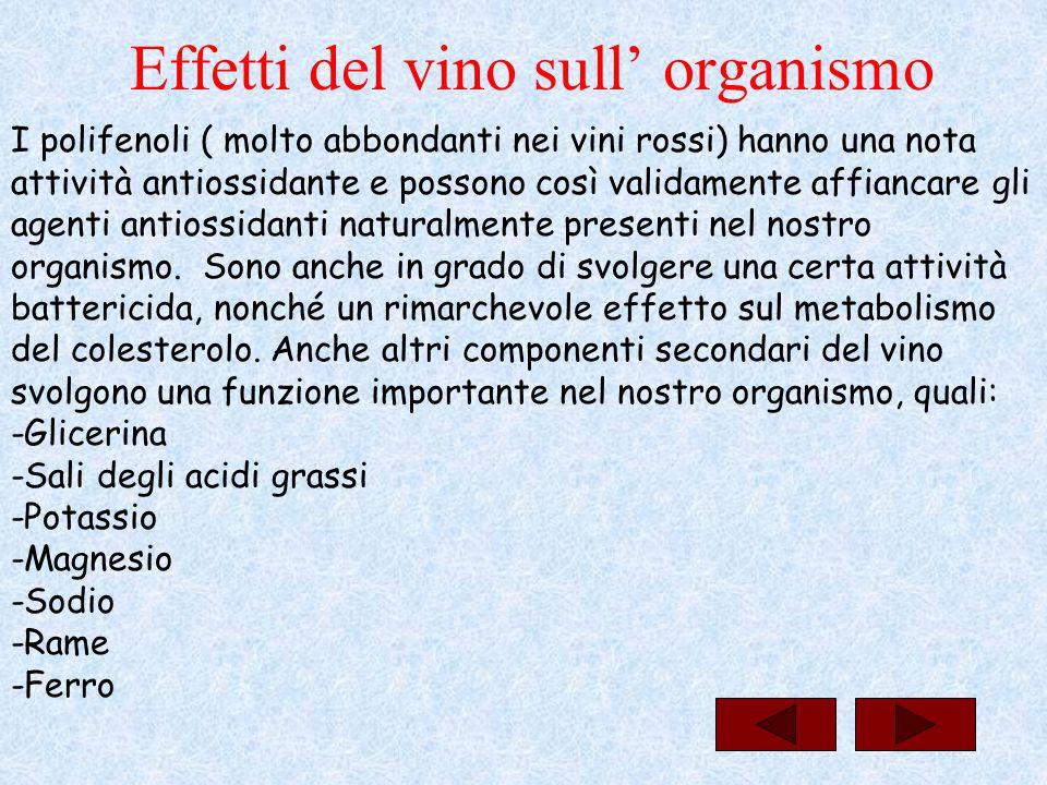 Effetti del vino sull' organismo