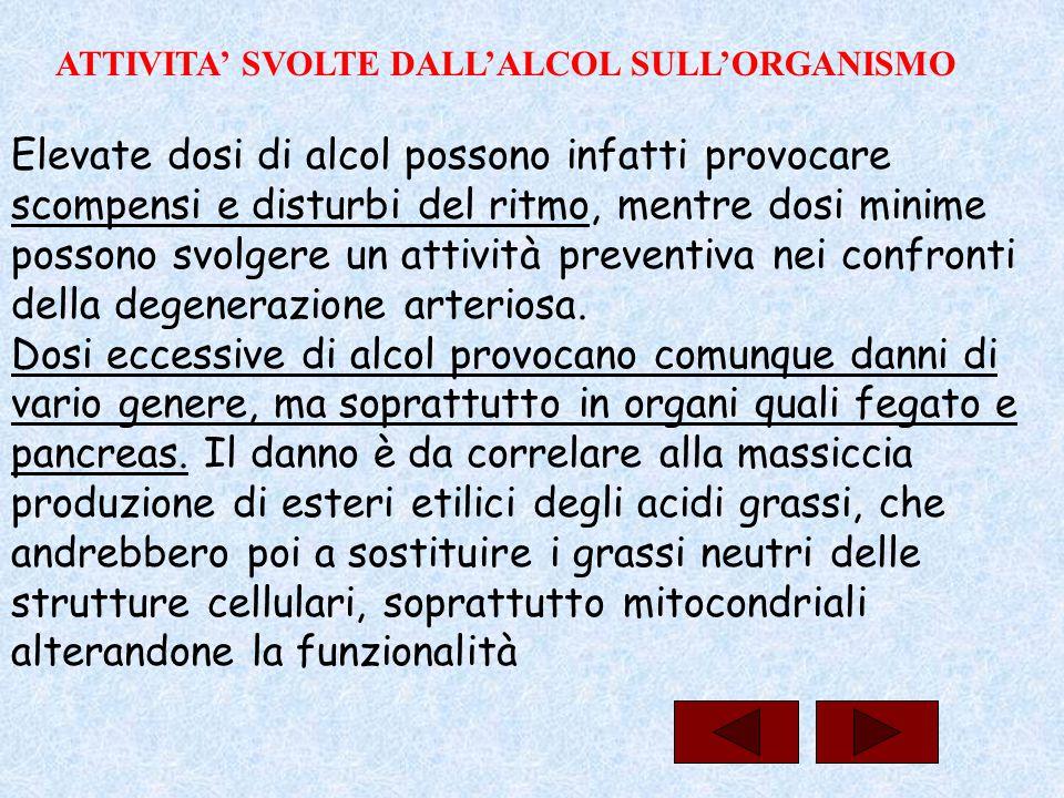 ATTIVITA' SVOLTE DALL'ALCOL SULL'ORGANISMO