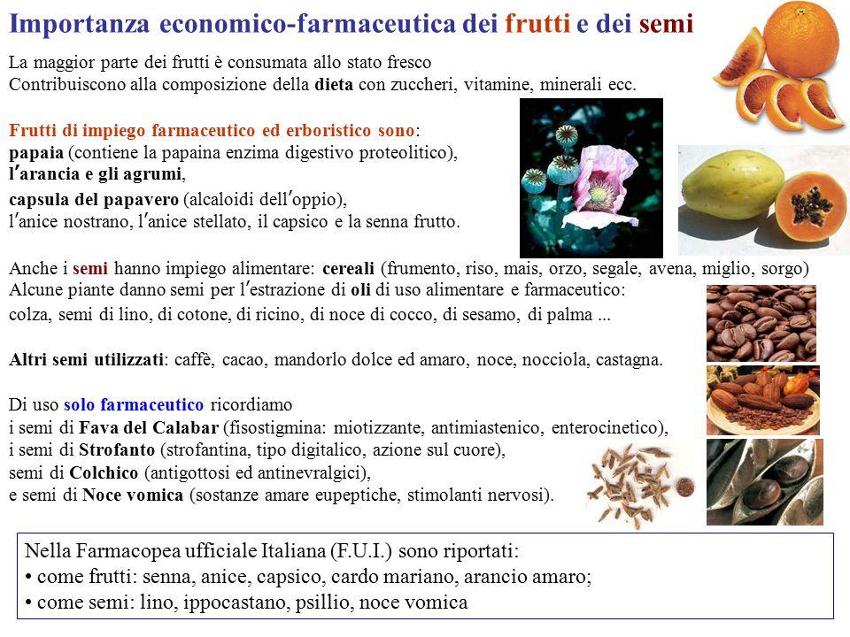 Importanza economico-farmaceutica dei frutti e dei semi