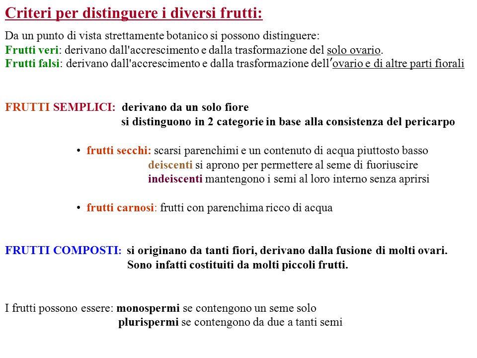 Criteri per distinguere i diversi frutti: Da un punto di vista strettamente botanico si possono distinguere:
