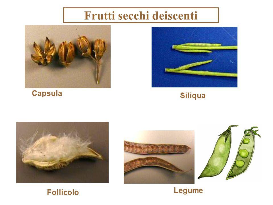Frutti secchi deiscenti