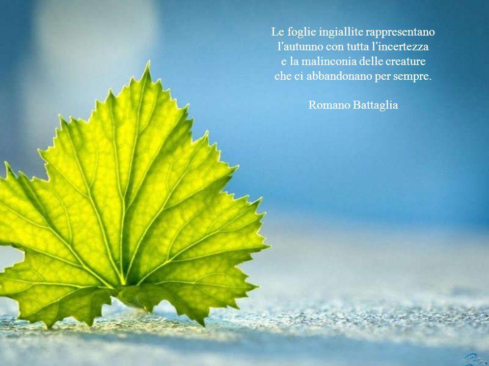 Le foglie ingiallite rappresentano l'autunno con tutta l'incertezza
