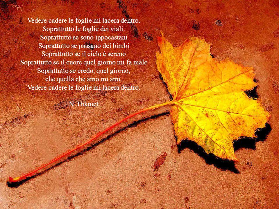 Vedere cadere le foglie mi lacera dentro.