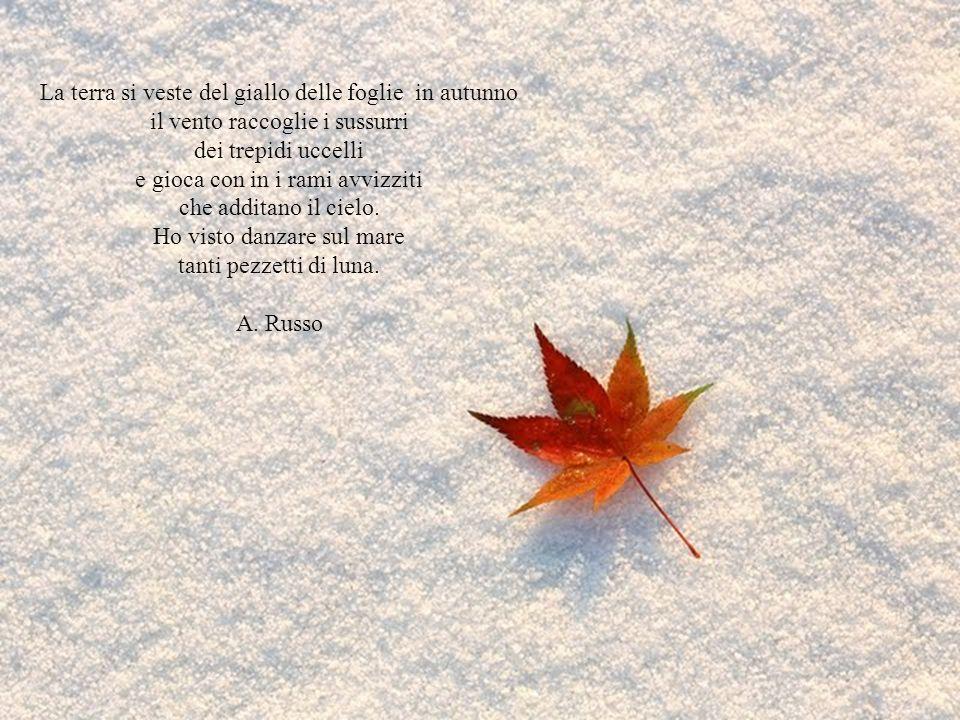 La terra si veste del giallo delle foglie in autunno