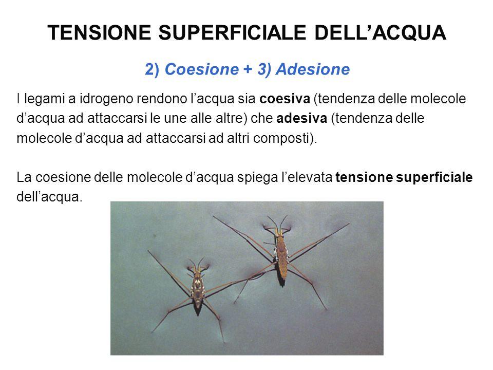 TENSIONE SUPERFICIALE DELL'ACQUA