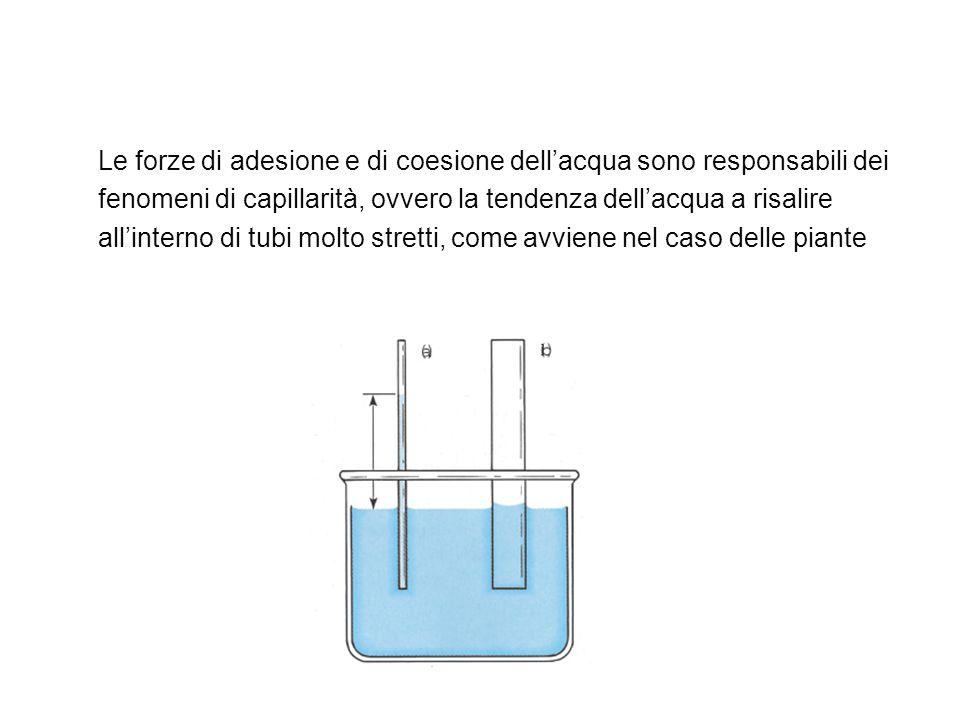 Le forze di adesione e di coesione dell'acqua sono responsabili dei fenomeni di capillarità, ovvero la tendenza dell'acqua a risalire all'interno di tubi molto stretti, come avviene nel caso delle piante