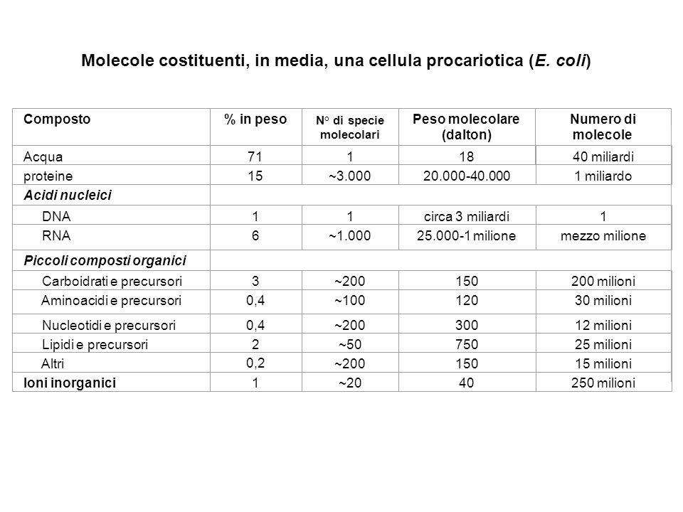 N° di specie molecolari Peso molecolare (dalton)