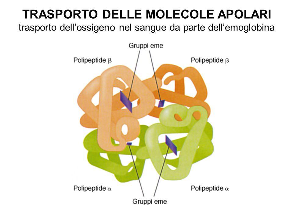 TRASPORTO DELLE MOLECOLE APOLARI