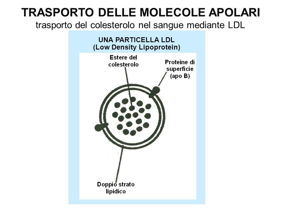 TRASPORTO DELLE MOLECOLE APOLARI (Low Density Lipoprotein)